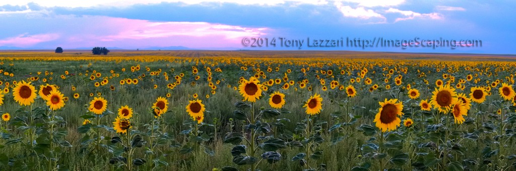 Tony Lazzari, Photographer
